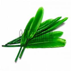 Набор натуральных декоративных перьев, зелёных, 12 - 15 см., 8 штук, REGINA