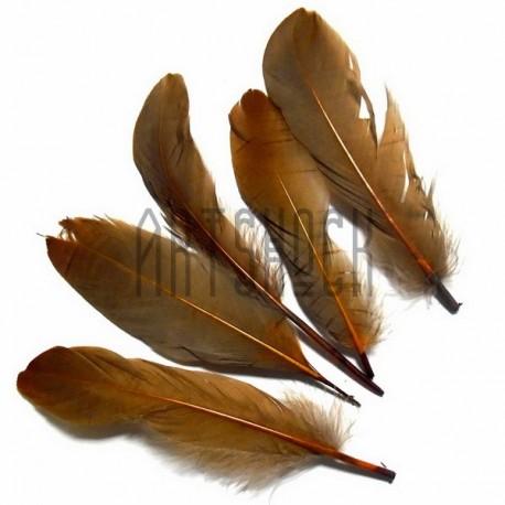 Набор натуральных декоративных перьев, кофе с молоком, 20 - 23 см., 5 штук, REGINA