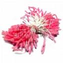 Тычинки для цветов (пестик) двусторонние, розовые, размер 10 мм., длина 6 см., REGINA